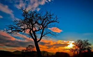 sunset-229335_1920