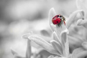 ladybug-796483_1920