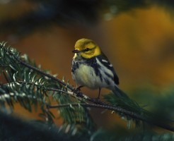 bird-702749_1920